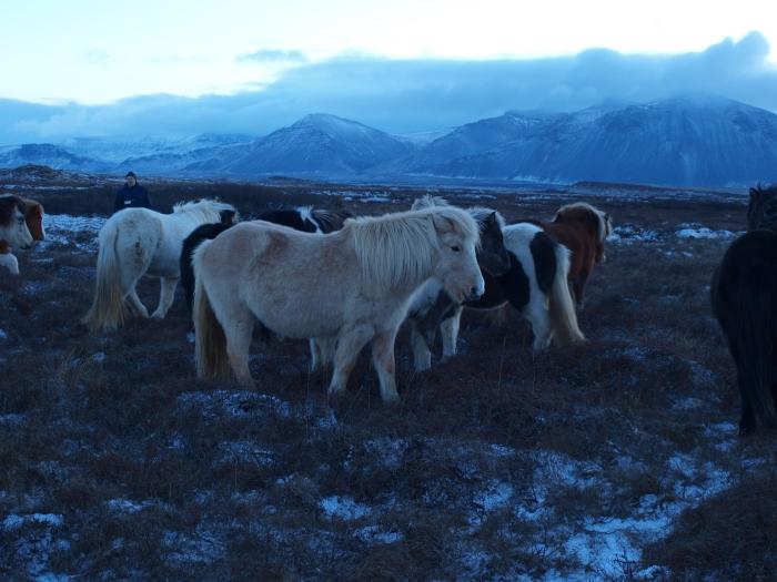Hästarna från Leirulaek